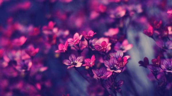 乙木,風水,命理,八字,紫天元社,玄學術數,陰陽,五行,flower,花