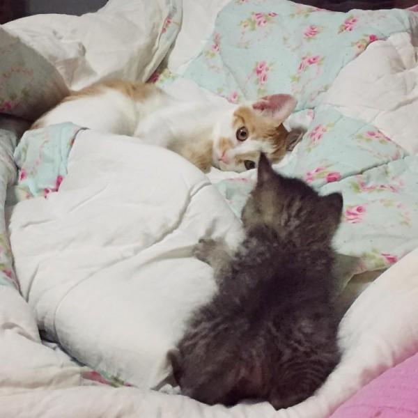 貓貓,cat